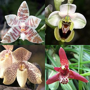 Orchideen - Bild-Quelle: Wikipedia.org