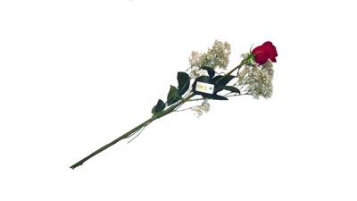 eine einzelne rote rose versenden bei. Black Bedroom Furniture Sets. Home Design Ideas